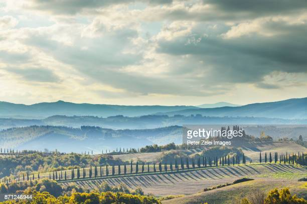 landscape in tuscany with cypress trees - italian cypress stock photos and pictures