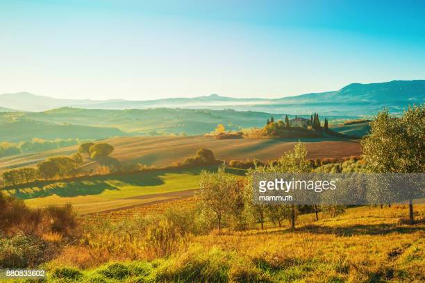 landscape in tuscany with olive tree plantation - chianti region stock photos and pictures