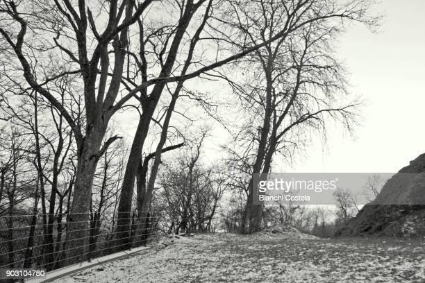 Landscape in winter in Vienna