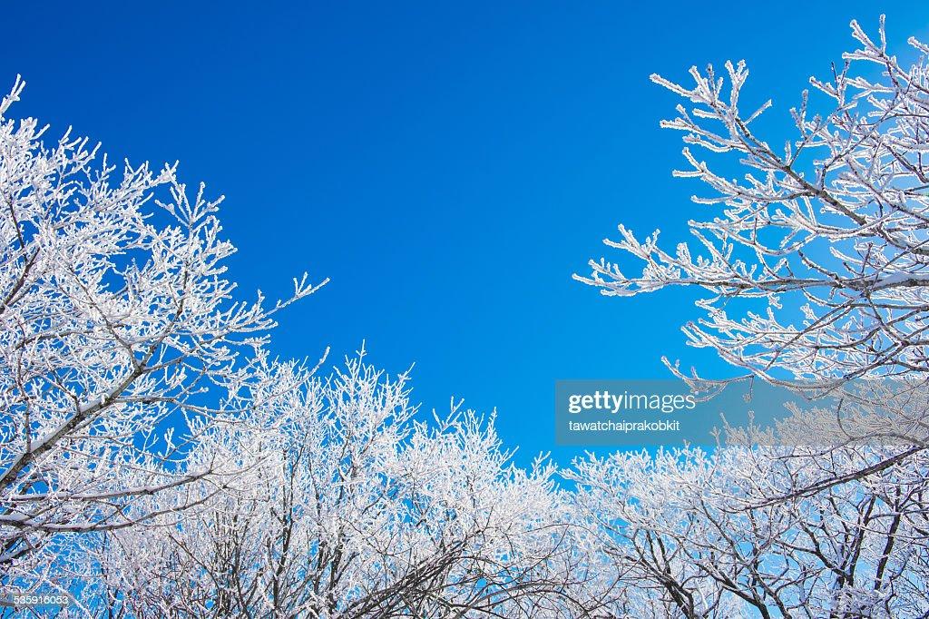 Paisagem do inverno, a Coreia : Foto de stock
