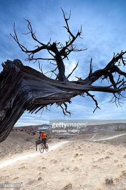 landscape mountain biking - western juniper tree stock pictures, royalty-free photos & images
