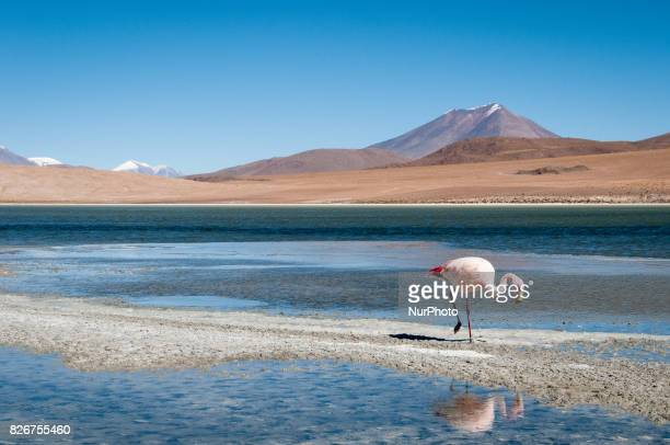 Landscape natural scenery and wildlife in the Uyuni Salt Flats and Atacama Desert in Bolivia Photos taken 67 June 2012
