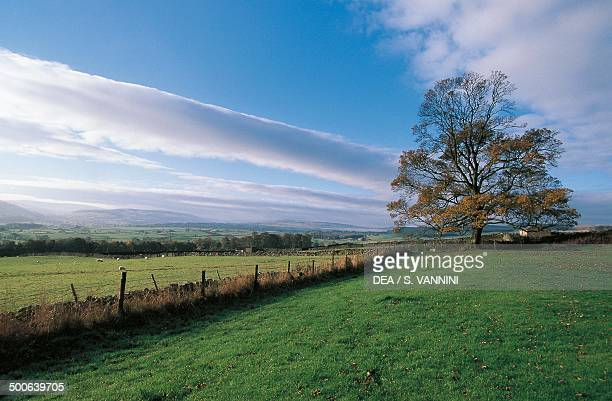 Landscape near Bolton castle with large oak on the right North Yorkshire England United Kingdom