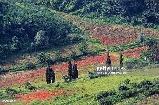 Landscape near San Miniato, Tuscany, Italy.