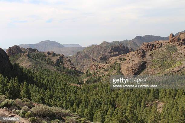 landscape near tejeda village in grand canary island, spain - tejeda canary islands stock pictures, royalty-free photos & images