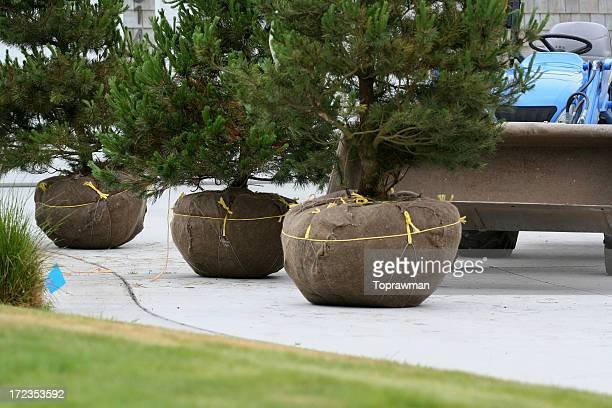 Landscape Nursery Trees