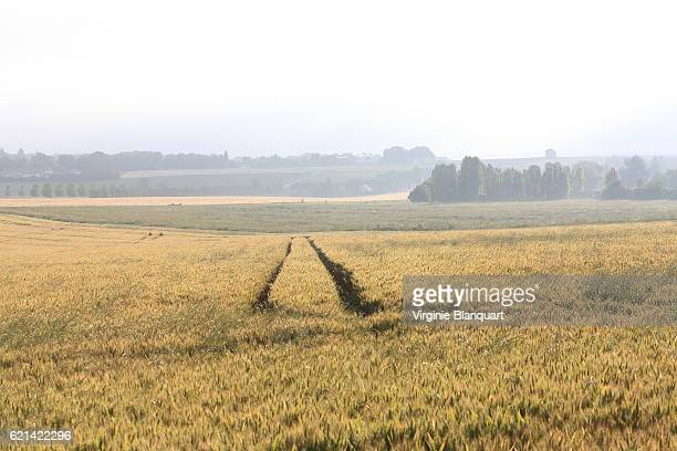 landscape of a countryside ville in île-de-france on a spring morning - yvelines stock pictures, royalty-free photos & images