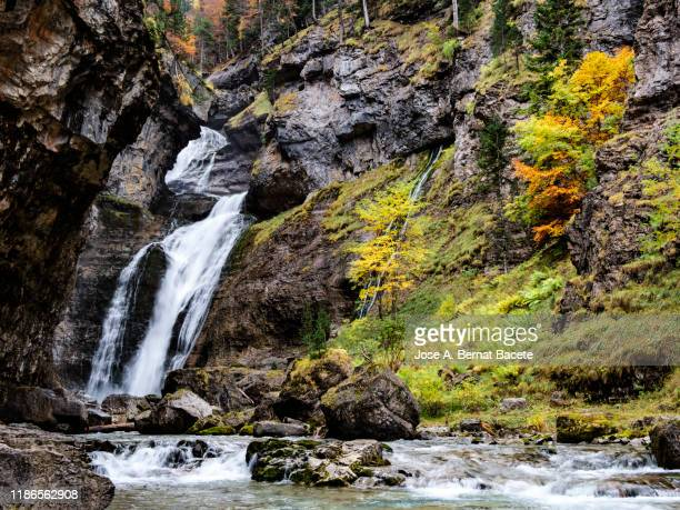 landscape of a forest in autumn with the leaves of colorful trees and a river with a waterfall. ordesa national park, spain. - 峡谷 ストックフォトと画像