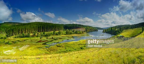 a landscape of a forest lake in south africa - limpopo province stock pictures, royalty-free photos & images