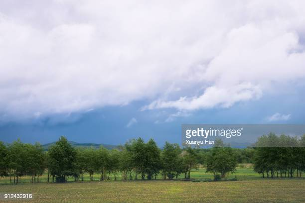 Landscape of a green field with trees and a cloudy sky.