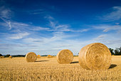 Landscape of a large hay field with numerous straw bales