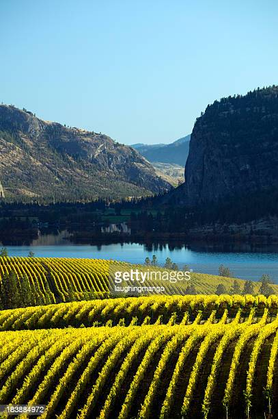 landscape of a vineyard in okanagan valley mcintyre bluff - thompson okanagan region british columbia stock pictures, royalty-free photos & images