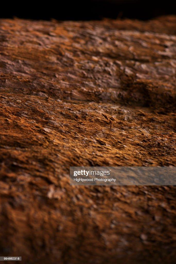 Landscape of Bark : Stock Photo