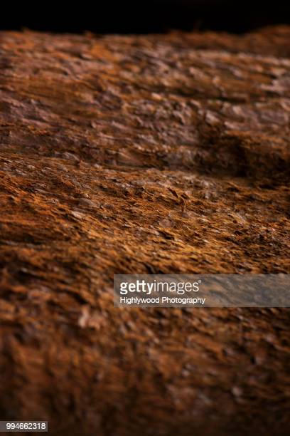 landscape of bark - highlywood stock photos and pictures