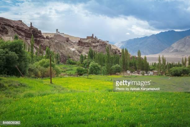 Landscape of Basgo Monastery and Canola field