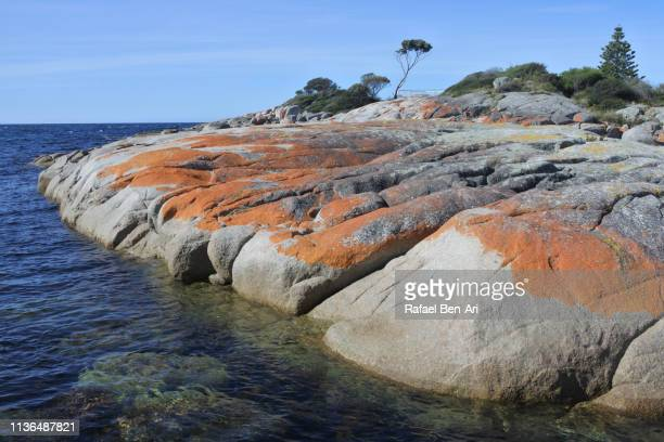 landscape of bay of fires tasmania australia - rafael ben ari stock pictures, royalty-free photos & images