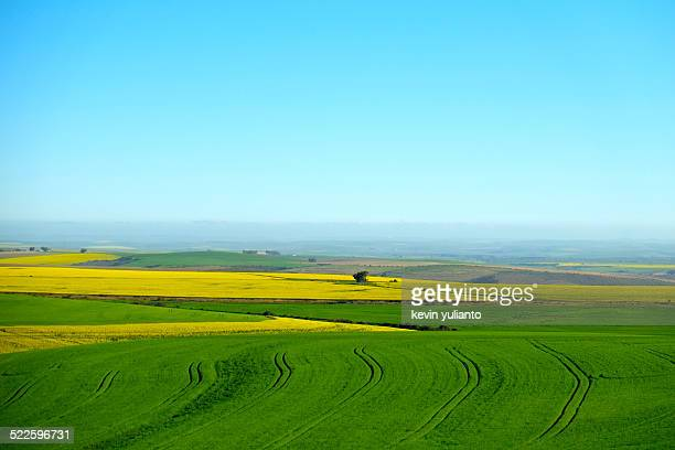landscape of canola fields - overberg stock pictures, royalty-free photos & images