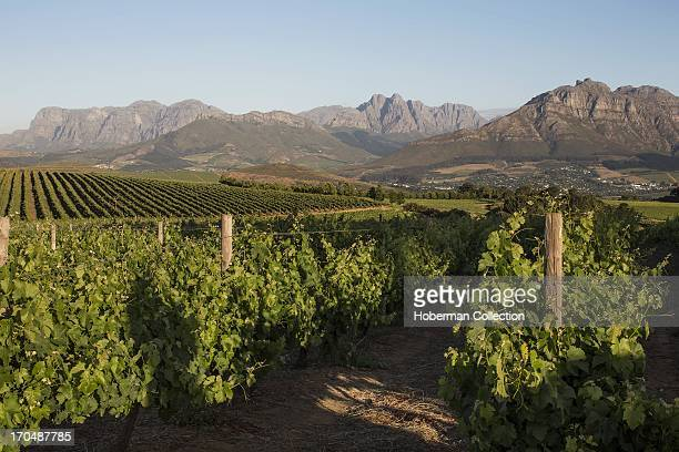 Landscape of cape winelands and montains
