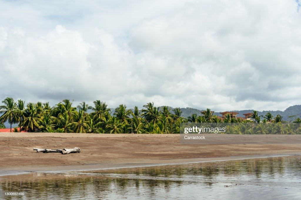 Landscape Of Caribbean Palm Trees On The Beaches Of Costa