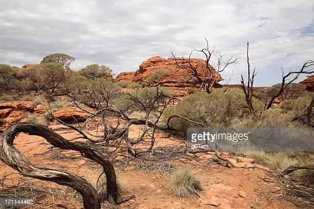 Landscape of Central Australia