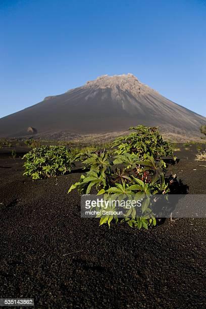 Landscape of Cha das Caldeiras at the foot of Fogo volcano on Fogo Island