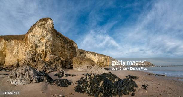 Landscape Of Cliffs Along The Coastline And Seaweed And Rocks On The Beach