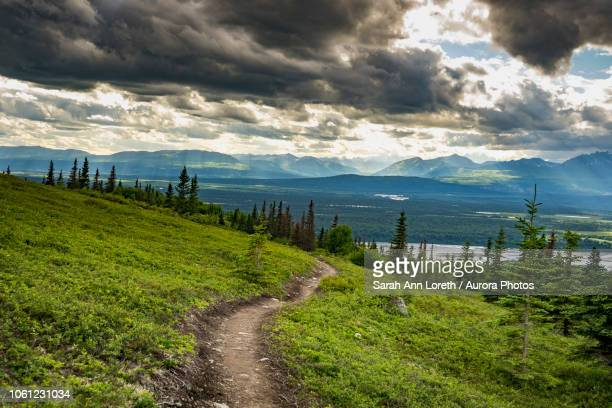 landscape of curry ridge trail in denali state park with footpath in meadow on hillside, alaska, usa - wilderness stock pictures, royalty-free photos & images