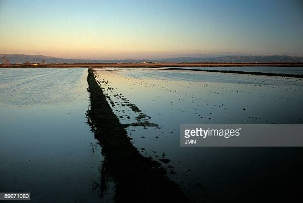 Landscape of Delta del Ebro Tarragona Rice fields