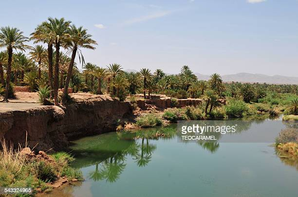 landscape of draâ valley - date palm tree stock pictures, royalty-free photos & images
