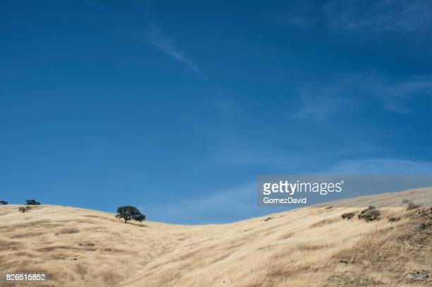 landscape of dry summer foothills along the pacific coast - foothills stock pictures, royalty-free photos & images