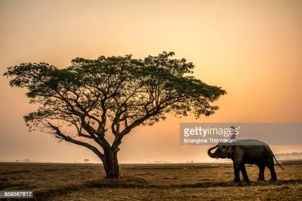Landscape of elephant village in Surin Province, Thailand.