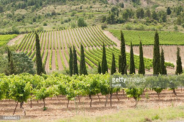 Landscape of forbears vineyards in France