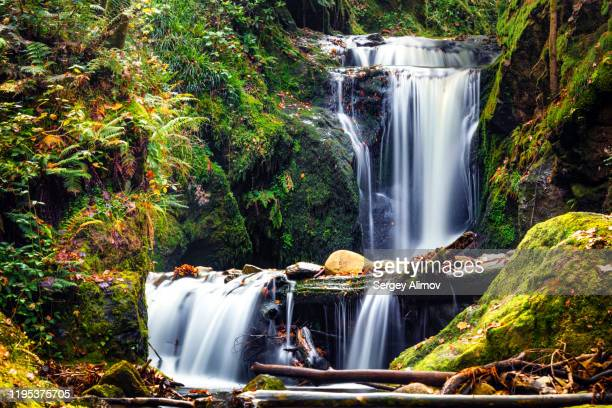 landscape of geroldsau waterfall powerful stream - germany stock pictures, royalty-free photos & images
