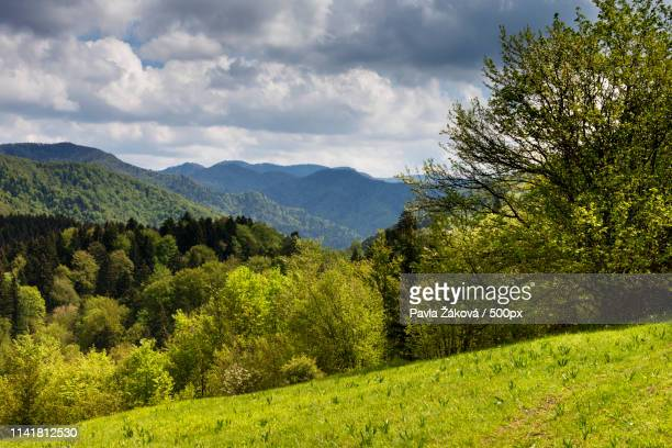 landscape of green hills of mountains - traditionally slovak stock pictures, royalty-free photos & images