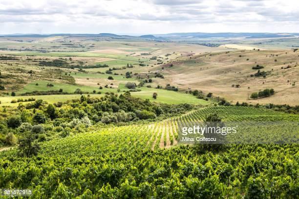 landscape of green vineyards, transylvania, romania - romania stock pictures, royalty-free photos & images