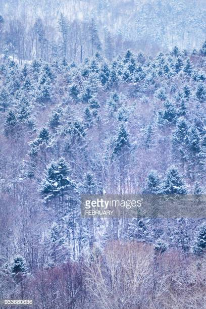 landscape of hokkaido - biei town stock pictures, royalty-free photos & images