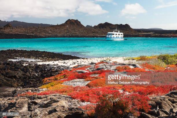 Landscape of Isla Santa Fe with red vegetation, turquoise ocean and a cruise ship in the background, Galapagos Islands.