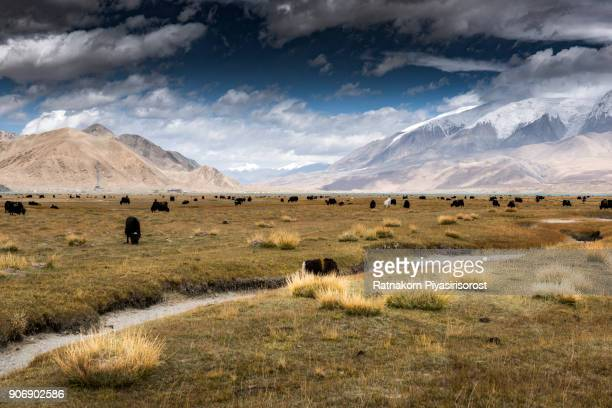 landscape of karakoram highway - afghanistan stock pictures, royalty-free photos & images