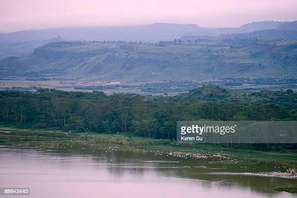 landscape of lake nakuru - lake nakuru stock photos and pictures
