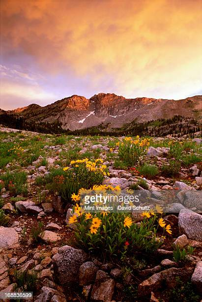 landscape of little cottonwood canyon, with the devil's castle mountain peak, in the wasatch mountain range. wild flowers. sunset. - castle mountain stock photos and pictures