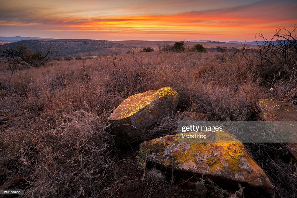 Image result for lichen on a rock at sunset