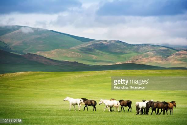 landscape of mongolia. - grazen stockfoto's en -beelden