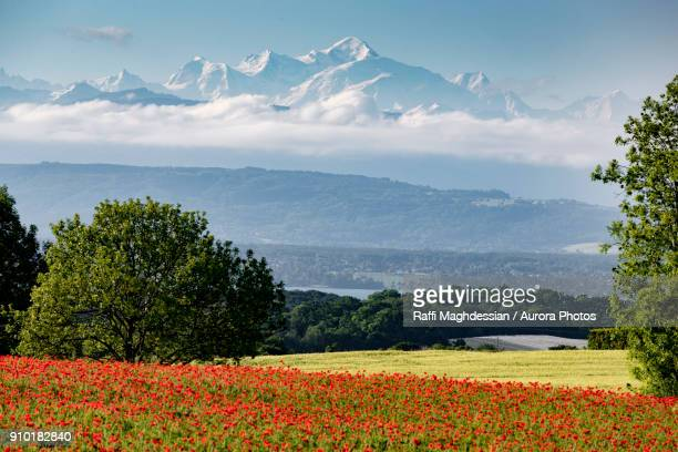landscape of mont blanc with red poppies, givrins, switzerland - vaud canton stock photos and pictures