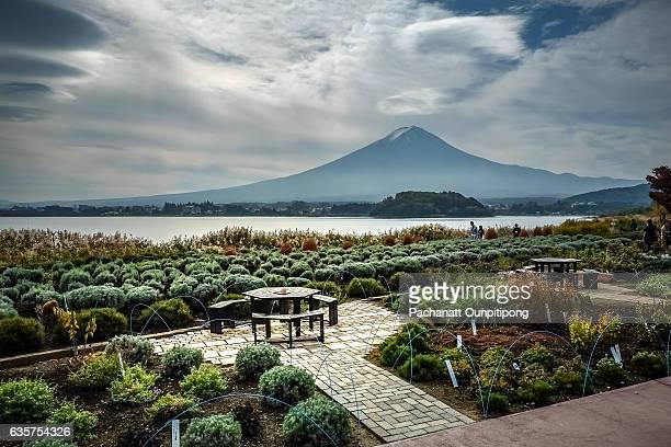 Landscape of Mt.Fuji at Oishi Park by Lake Kawaguchiko, Fujikawaguchiko, Japan