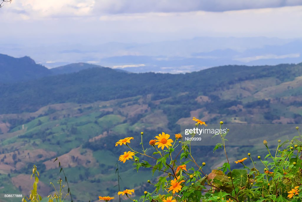 Paysage de Phu Ruea parc National de Thaïlande. : Photo