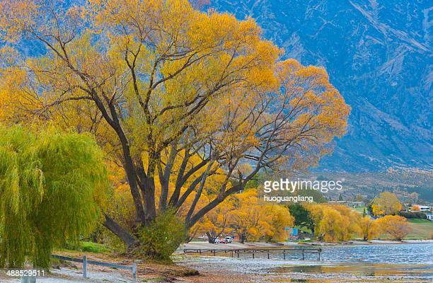 Landscape of poplar