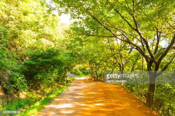 landscape of red clay road in gyejoksan mountain, daejeon, south korea - daejeon stockfoto's en -beelden