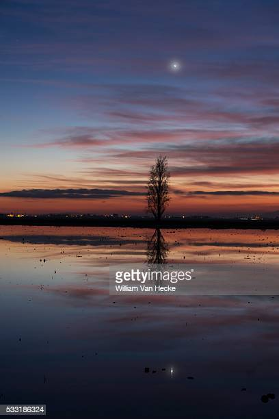 Landscape of rice fields at the Ebro Delta in Spain after nightfall PICTURE NOT INCLUDED IN THE CONTRACT