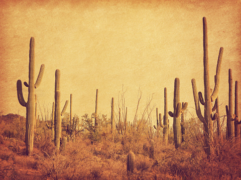 Landscape of the desert with Saguaro cacti. Photo in retro style. Added paper texture. Toned image 943427958