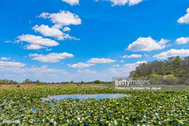 landscape of the everglades - everglades national park stock pictures, royalty-free photos & images